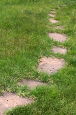 Bouteloua dactyloides - Buffalo Grass_XG_20090720_LAH_7322