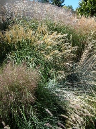 Grass border @DBG 19sept05 LAH 126