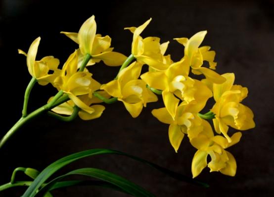 Orchids_DBG-CO_LAH_5020 (2)