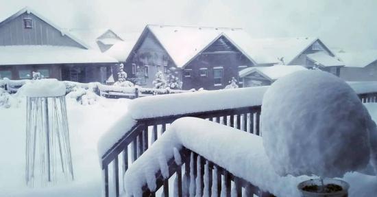 Backyard snow r