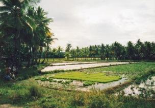 1989-6 Philippines rice paddies 079