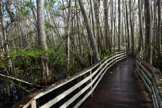 CorkscrewSwamp-FL_LAH_5943