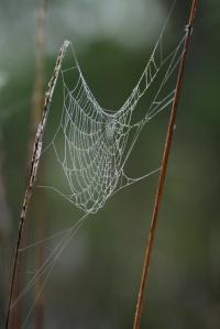 spiderweb_CorkscrewSwamp-FL_LAH_5723