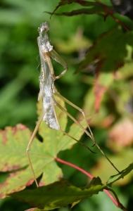 Praying Mantis exoskeleton_DBG-CO_LAH_7398