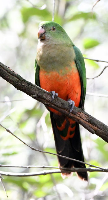 12 Katoomba-NSW-Australia_LAH_5599