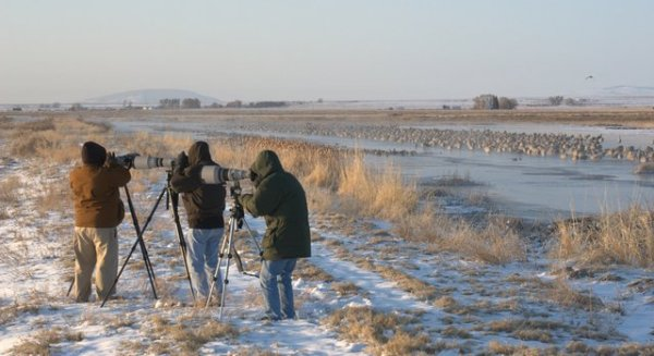 Photographers with Sandhill Cranes_MonteVistaNWR-CO_20100321_LAH_0740.nef