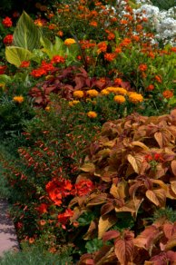 Orange border_DBG_LAH_2691