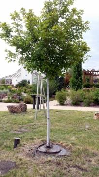 watering tree 2
