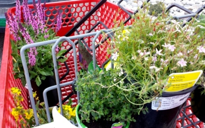 Plants in shopping cart_20160413_131405