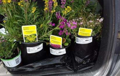 Plants in trunk_LAH_132736