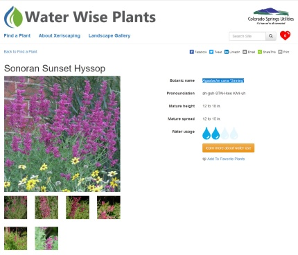 waterwise - plants