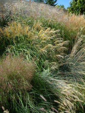 Ornamental grass border at Denver Botanic Gardens