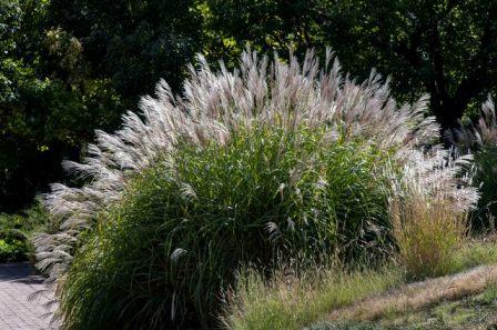 Grass_DBG_LAH_7917r