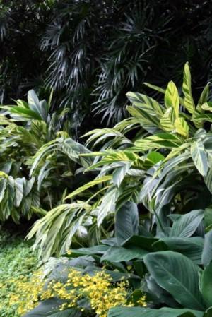 BotanicGardens-Singapore_LAH_7728
