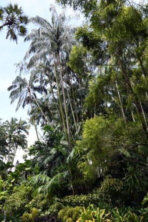 Palm_BotanicGardens-Singapore_LAH_7726